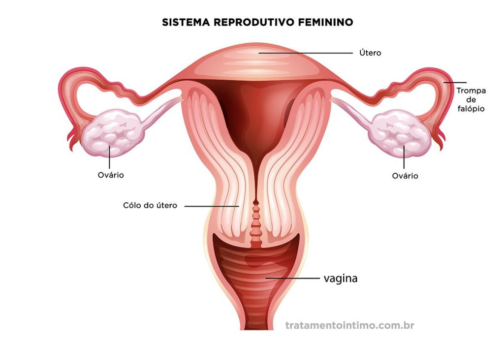 O que é vagina - sistema reprodutor feminino